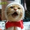 誕生日がクリスマスイヴの猫
