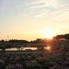 山口ゆめ花博開催|1000万の花が咲き誇る未来公園の魅力に迫る