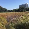 掛川野池群完全攻略マップ『菖蒲ヶ池』