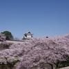 PENTAX K-3で桜「石川門」