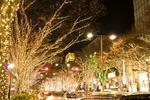 東京都内のおすすめイルミネーション10選。冬は幻想的な光の世界を見に行こう!