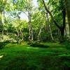 新緑の京都 祇王寺