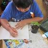 3年生:理科 ホウセンカの苗の観察