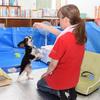 西日本豪雨で被災した岡山県倉敷市真備地区の避難所にペット専用空間が!飼い主は気兼ねなく過ごせると歓迎の声!