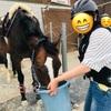 明石乗馬協会で手軽に乗馬体験!【西明石駅からバスで15分】