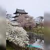 北海道唯一のお城、松前城に行ってみました。