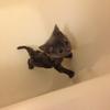 子猫と私のはじめてのお風呂