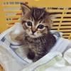 【にゃんこ】仔猫のムギがやってきた! 初日〜2日目の記録
