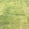 芝生の中の雑草たち