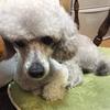 2020年6月27日 えるぞう(犬)の通院記録 ~腸リンパ管拡張症(IBD)と慢性腎不全