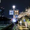 【地図&写真付】桜満開のテラス!飯田橋カナルカフェは都心デートにおすすめ