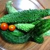 【本日の採れたて野菜】家庭菜園は節約になるのか考えてみた