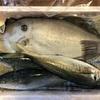 3000円の鮮魚ガチャで届いたデカいウスバハギを、捌いていくゥ!!