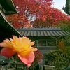 田川邸の紅葉真っ盛り