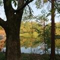 今年も、狭山公園の紅葉はきれいじゃの