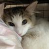 隠れても「ばればれ」!我が家のお猫様ひま日記16