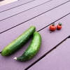お野菜が採れました!~テラスのお野菜みんなで食べたよ!~