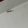 虫とか蜘蛛とかヤモリとか