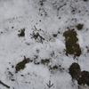 雪、三日目。