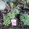 ロータリーの花々