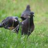 いつもは撮らない鳥を撮る@多摩川(登戸~稲田堤)【1】