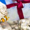 【水族館撮影のコツ教えます】新江ノ島水族館(えのすい)で撮影しました