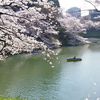 桜散歩ログ