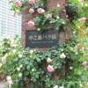 フォトブログ 大阪 中之島公園バラ園 今年のベスト5とカメラ買い替えでぐるぐるの話