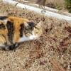 【広島県】千光寺にいくと猫が沢山いるよ!!猫に出会える千光寺の魅力とは!?
