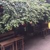 『おしゃれカフェ』中崎町にある「Salon de AManTo 天人」はまさに隠れ家!