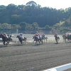 気になる傾向(京都・ダート)馬番だけで買っても儲かる?!