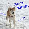 真夏の雪まつり NDA 桧枝岐村大会7 ラスト (2日目-2 )
