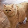 動物の瞳AFを猫カフェでテスト。