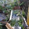 庭が少し、きれいになりました。他には、ミニドワーフバナナと蓮の種。