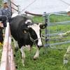 台風で孤立、牛840頭救出開始 飼い主「会えてホッ」