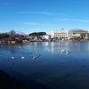 高松の池と白鳥!そして、この1年!