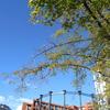 秋晴れの気持ちのいい日の過ごし方