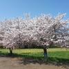 春の小貝川CRをモスモス・其の貳