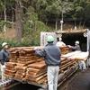 森林林業技術センターでの製材②
