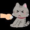 ペルシャ猫の寿命とかかりやすい病気について飼い主が徹底的に調べてみた!