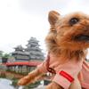 よくある疑問🤔『松本の観光スポットって松本城だけ?』