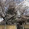 『新井山梅照院』(東京都中野区)