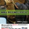 日本から象牙の密輸を企みまたもや中国人が逮捕されました