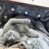 階段から落ちたネコ