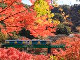 電車旅のお楽しみ!秋の味覚が楽しめる、名物駅弁5選【第2弾】