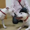 【犬版】ハナちゃんの動物病院 Complete④ ~診察記だったり、闘病記だったり~