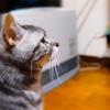 愛猫が老衰で死んだ。今まで本当に本当に本当にありがとう。