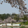 【行った】愛知県岡崎市 岡崎公園の桜と岡崎桜まつりの見どころ、屋台、駐車場情報なども