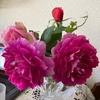 今年最後の薔薇とキンカン