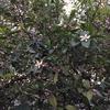 2-48   レモンの花